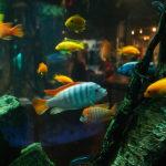 Luxusní designové akvária