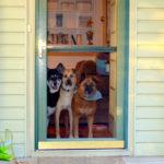 Dveře pro vaše mazlíčky