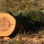 Kácení stromů na soukromém pozemku nemusí být bez rizika. Jak na to?